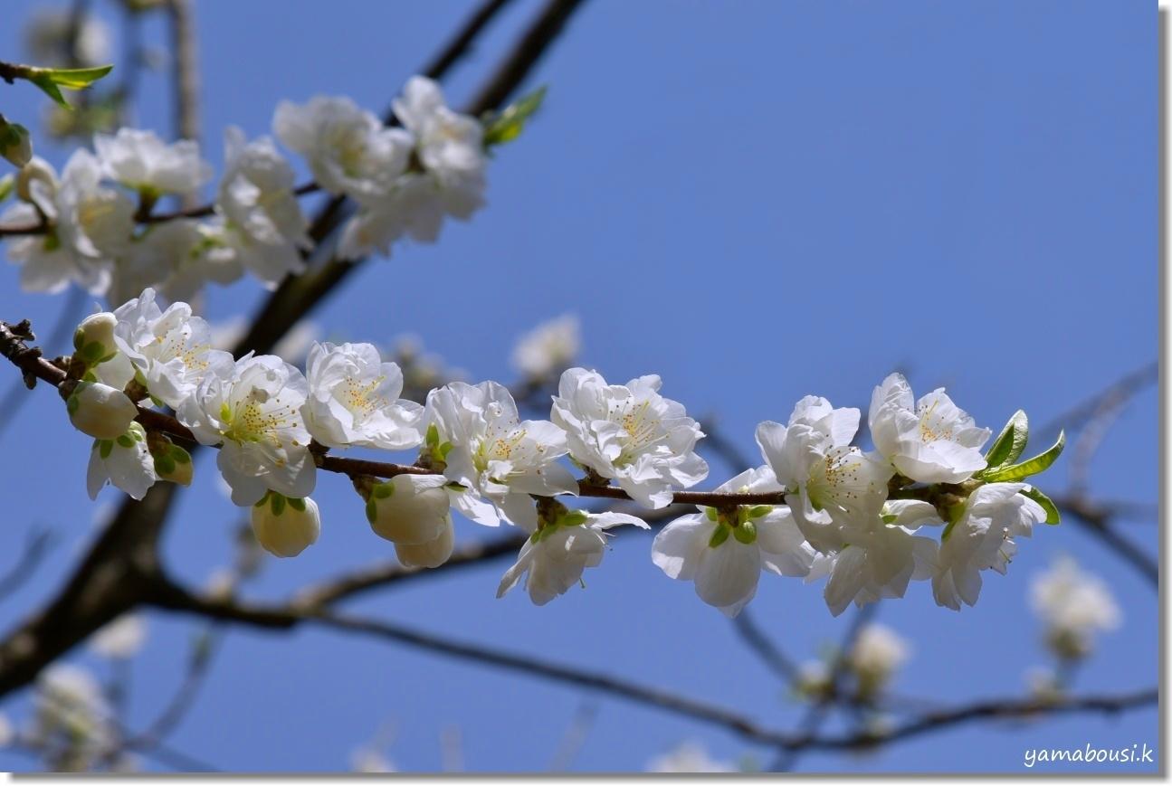 心ときめく早春の花々 3