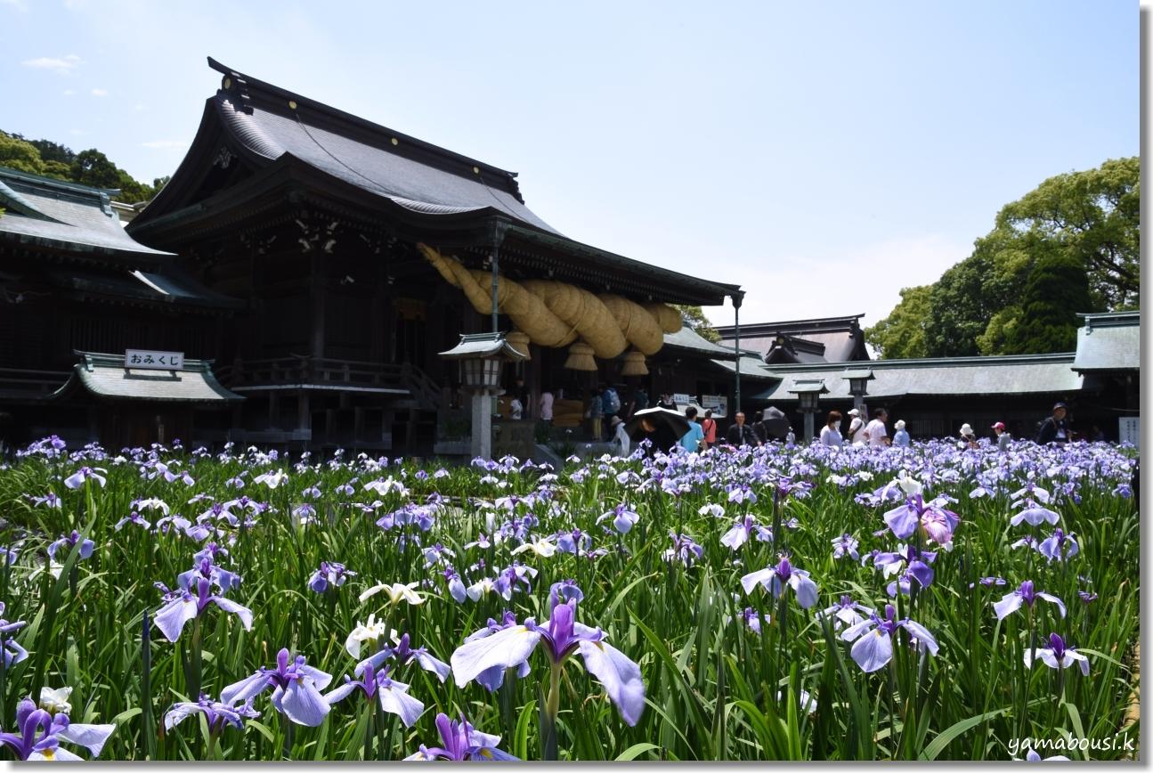 宮地嶽神社 菖蒲まつり(2019) 1