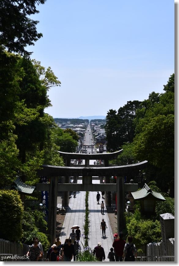 宮地嶽神社 菖蒲まつり(2019) 10