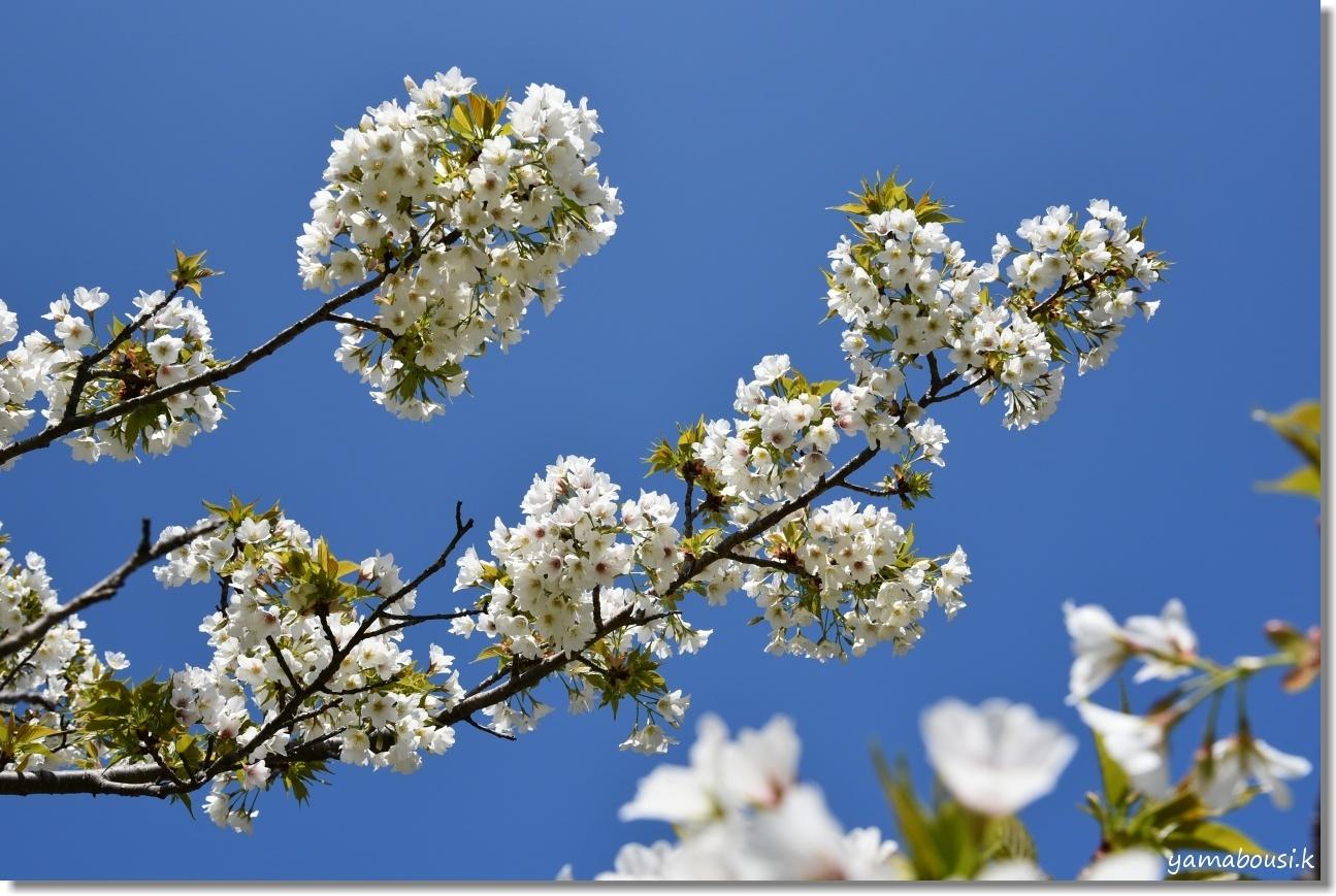 うみなか(2019)春を彩る花々 3