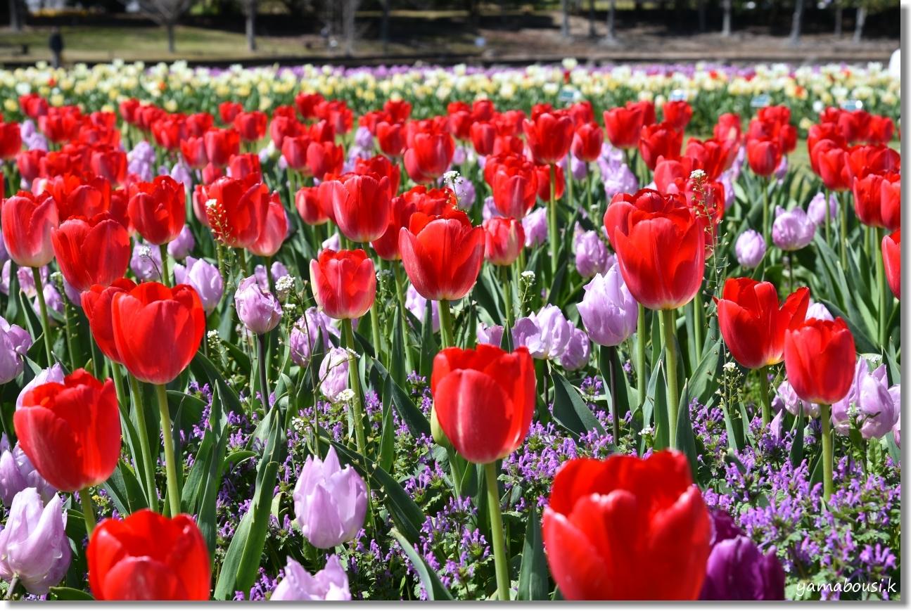 うみなか(2019)春を彩る花々 1