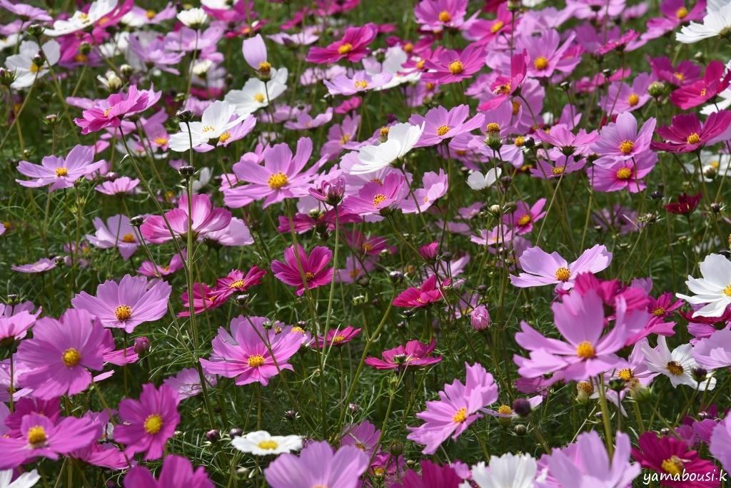 キリン花園 DSC_6379