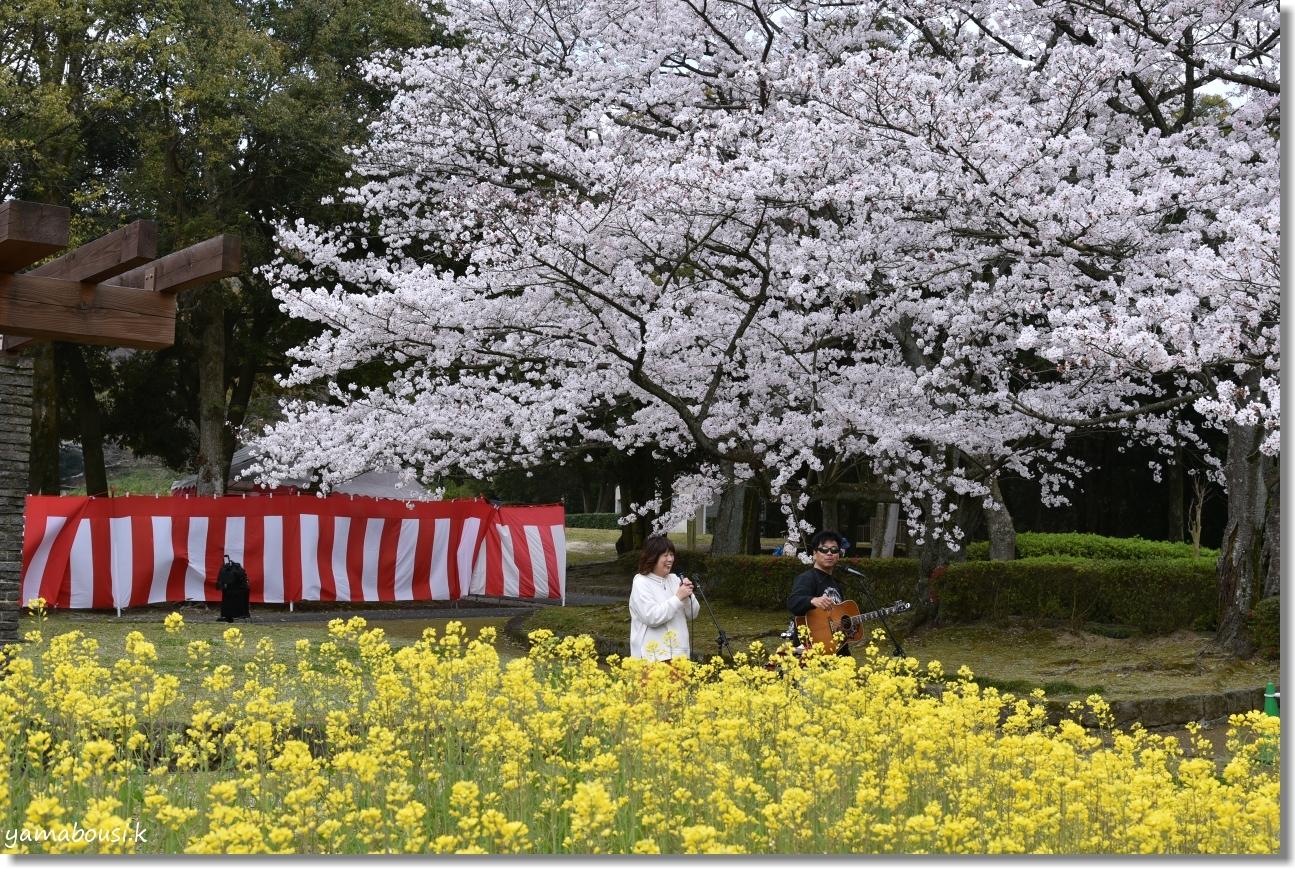 花畑園芸公園 桜 5