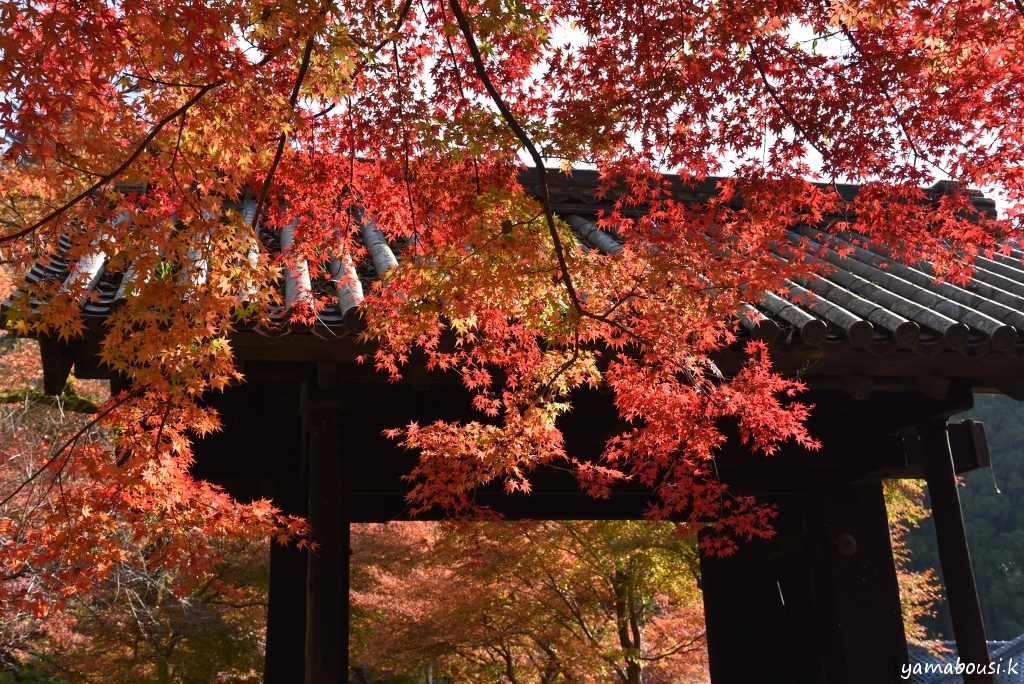 秋月城跡の黒門 DSC_8698