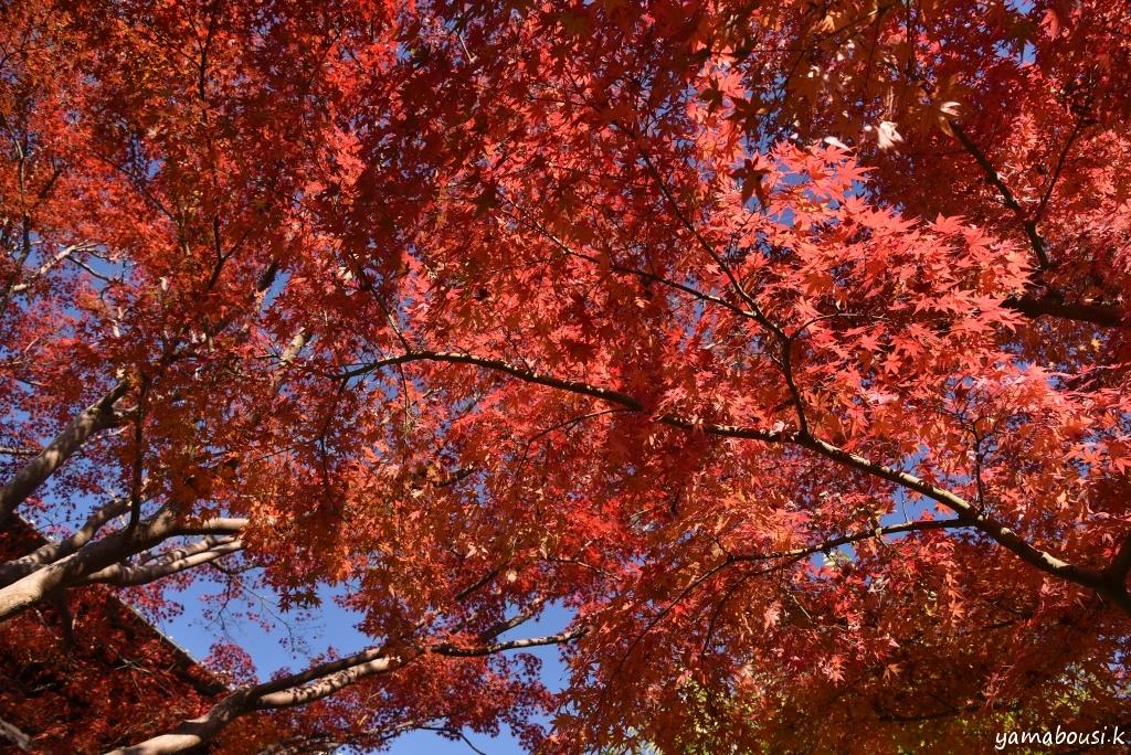 白野江植物公園 DSC_9080