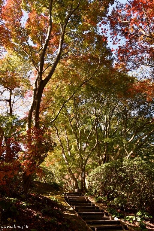 白野江植物公園 DSC_9210