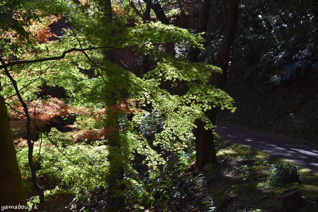 白野江植物公園 DSC_9236