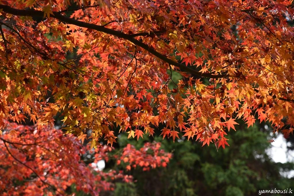白野江植物公園 DSC_9393