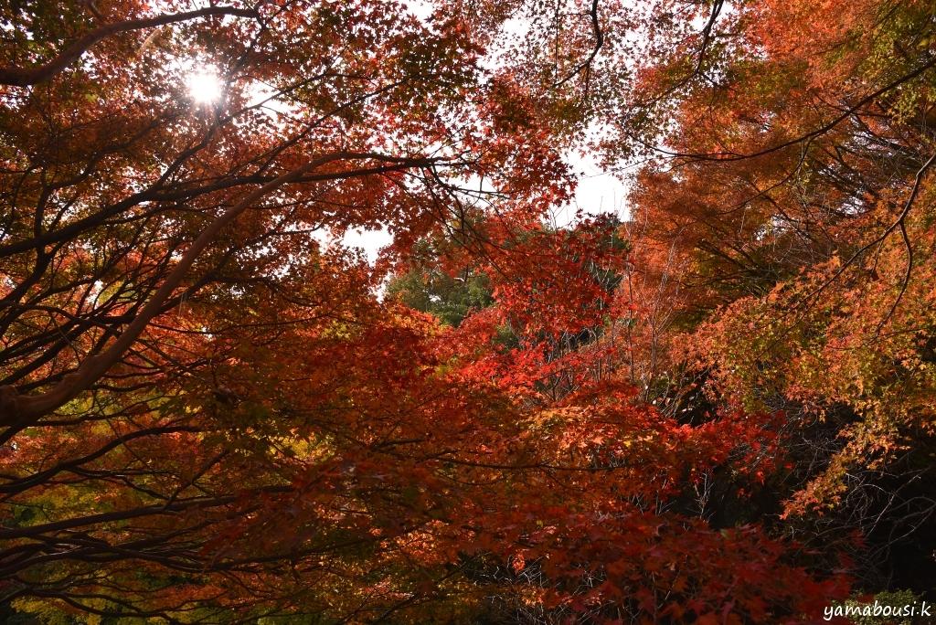 白野江植物公園 DSC_9442