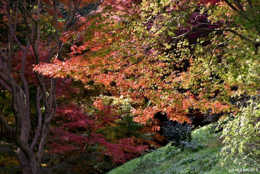 白野江植物公園 DSC_9497