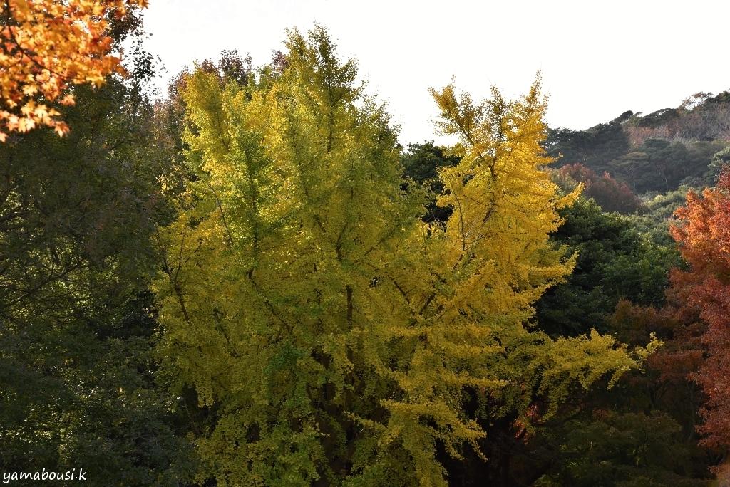 白野江植物公園 DSC_9634
