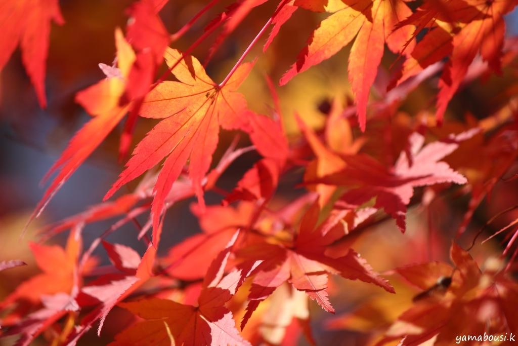 那谷寺の紅葉 IMG_0455