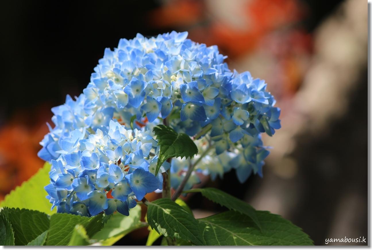 雨の季節を彩る花々 1