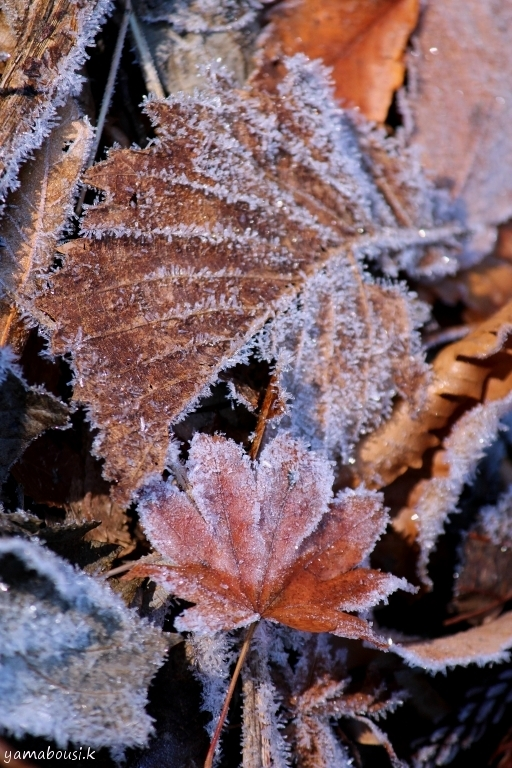 初冬の白山ろく 7
