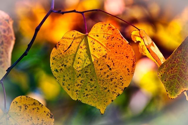 autumn-leaves-3813775_640.jpg