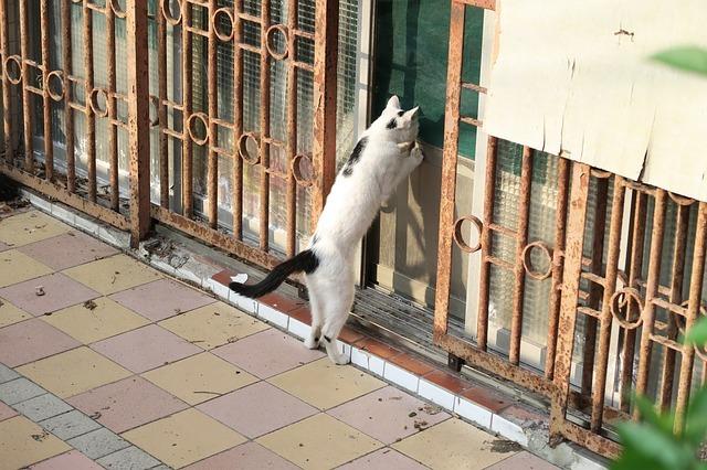 cat-3409000_640.jpg