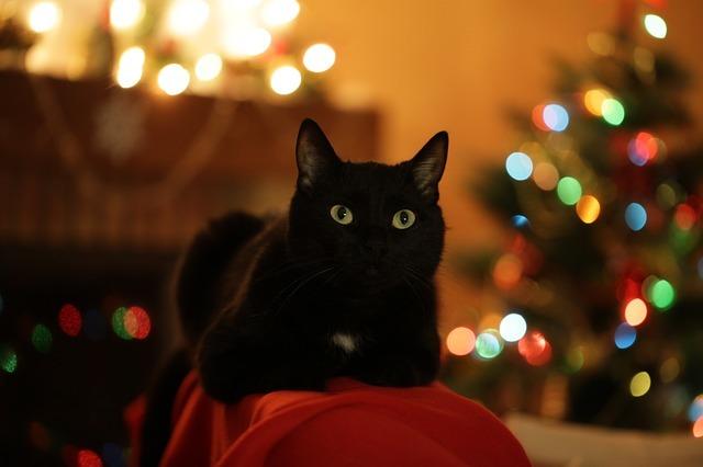 christmas-cat-3805080_640.jpg