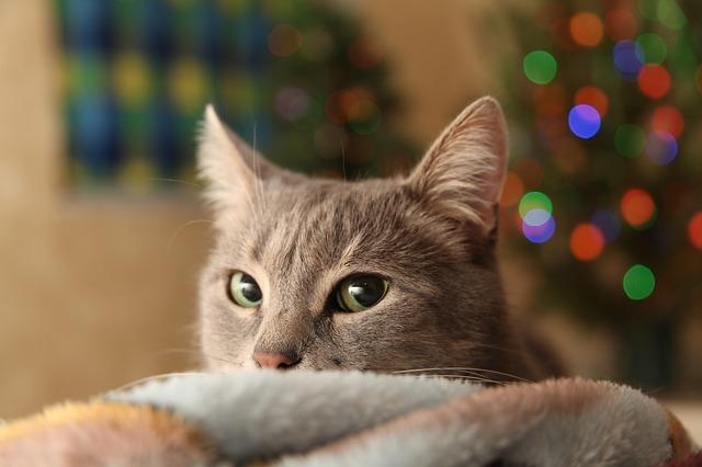 christmas-tree-3805104_640.jpg