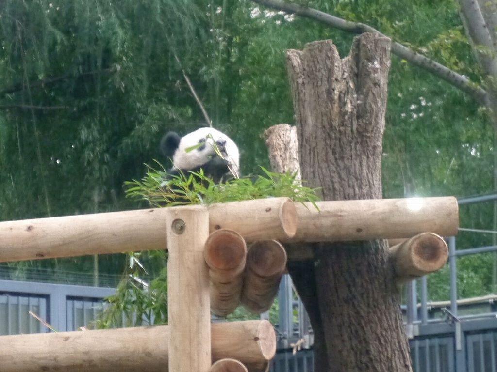 1歳4カ月☆愛らしいシャンシャンに会いに「上野動物園(台東区上野公園)」