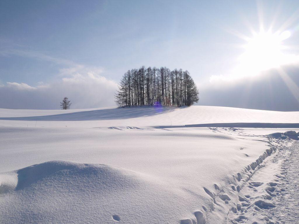 「白銀の美瑛観光(北海道美瑛町)」どこまで行っても大自然&雪景色☆美瑛の魅力発見!