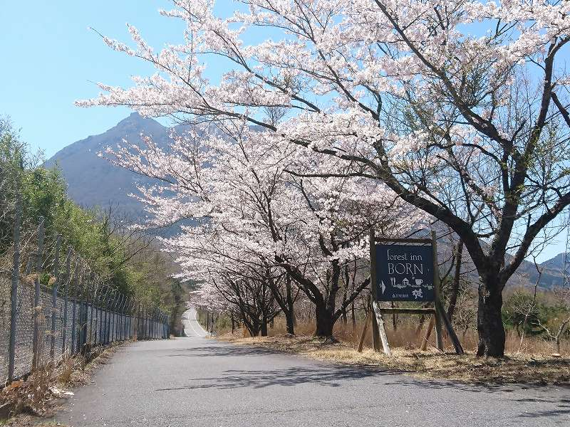 「forest inn BORN(大分県由布市)」たまのランチは☆一皿ごとに感動のフレンチ!!