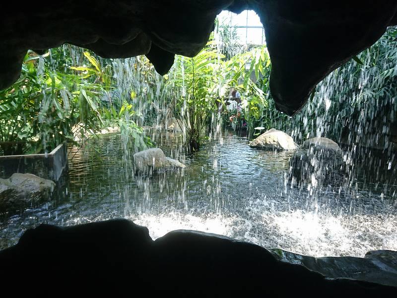 「熱帯生態園(北九州市若松区)」暑さも含めてまさに南国の森林!