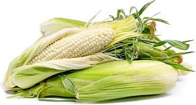 白いとうもろこしの農業体験食育イベント