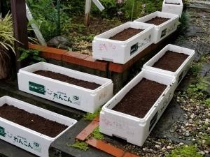 畑の整備と種まき
