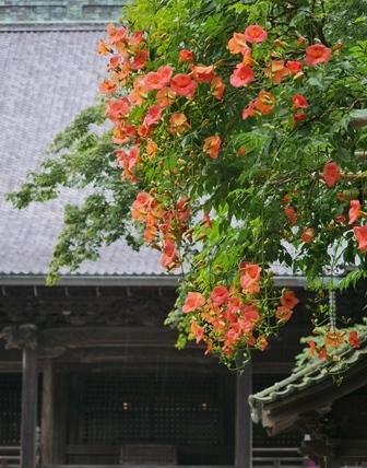 プリン 通り 鎌倉 小町