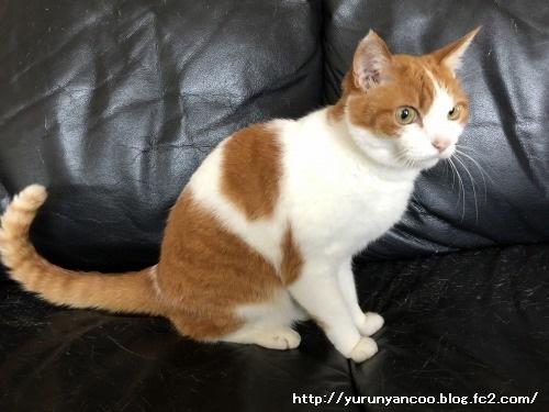 ブログNo.1555簡単(エアロビ猫)1
