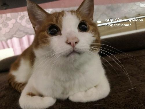 ブログNo.1552潰れ猫&おまけ(ふれあい牧場)1