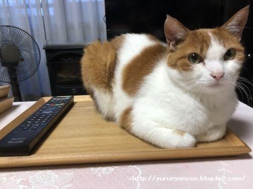 ブログNo.1585(トレイに乗った猫)3