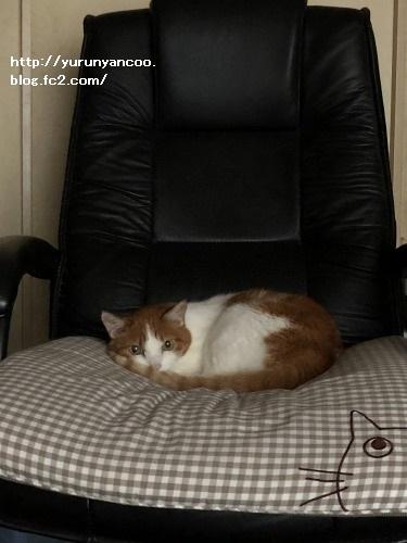 ブログNo.1591(布団と猫)2