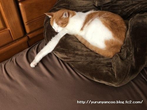 ブログNo.1591(布団と猫)3
