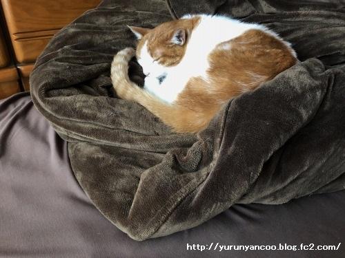 ブログNo.1591(布団と猫)7