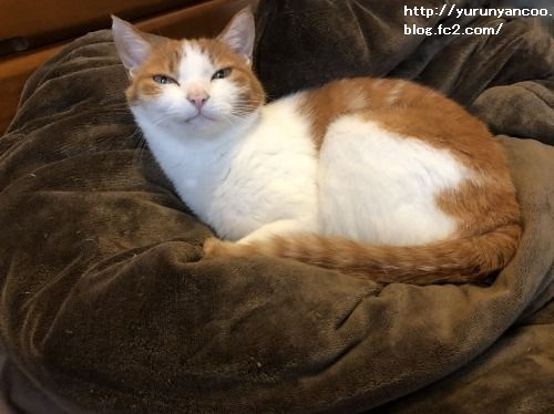 ブログNo.1591(布団と猫)8