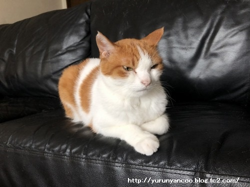 ブログNo.1591(布団と猫)14