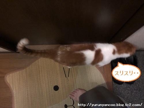 ブログNo.1621(心配事)4
