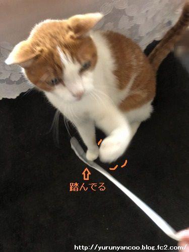 ブログNo.1621(心配事)7