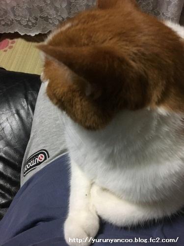 ブログNo.1330お膝猫&おまけ多め(ベビくぅちゃん⑦)2