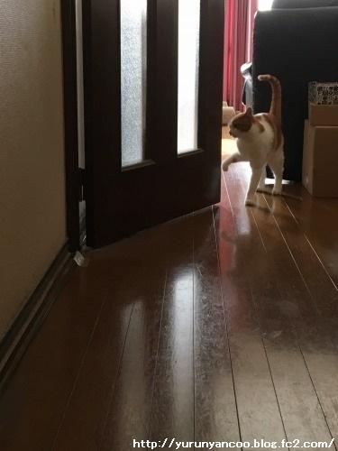ブログNo.1384病院から帰宅後の猫(前編)&おまけ(Xmasツリー)5
