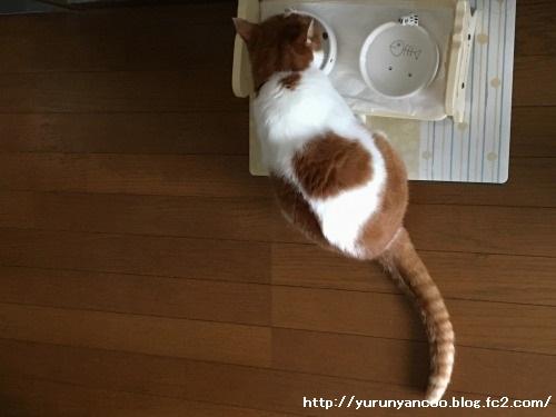 ブログNo.1384病院から帰宅後の猫(前編)&おまけ(Xmasツリー)13