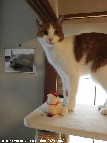 ブログNo.1386(病院から帰宅後の猫(後編))2