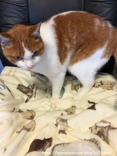 ブログNo.1386(病院から帰宅後の猫(後編))8