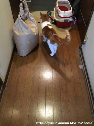 ブログNo.1386(病院から帰宅後の猫(後編))9
