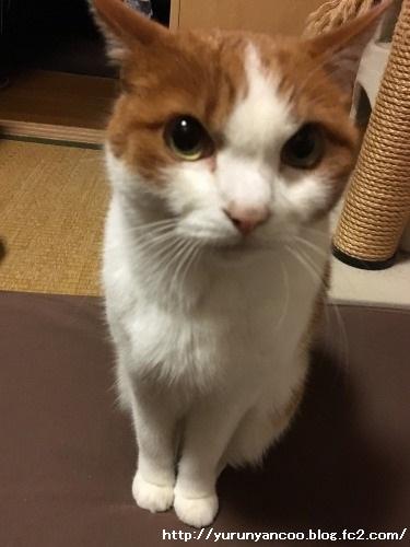 ブログNo.1398(心配性な猫?)1