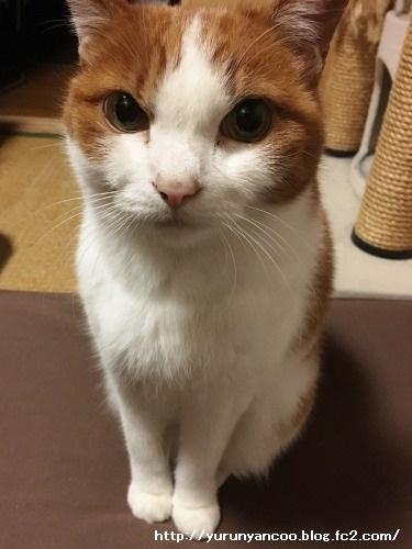 ブログNo.1398(心配性な猫?)3