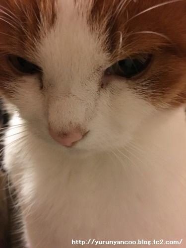 ブログNo.1398(心配性な猫?)4