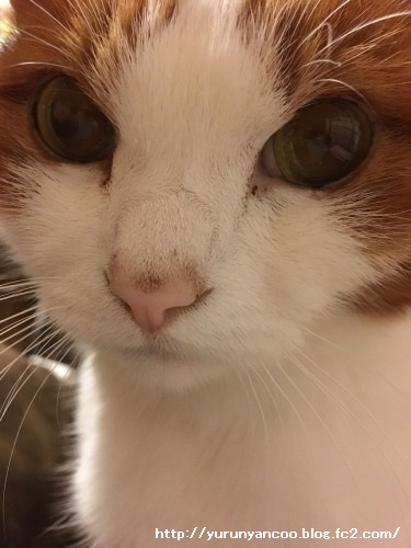 ブログNo.1398(心配性な猫?)5