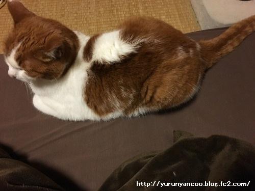 ブログNo.1398(心配性な猫?)6